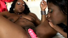 Busty black lesbians Tiffany Stacks and Cocoa share a dildo and enjoy pure pleasure
